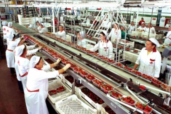 Staffing Agency for Food Processing Companies